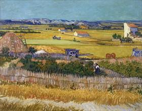 Van Gogh, La récolte