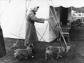 La reine Elisabeth II promenant ses chiens