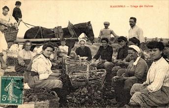 Ostréiculteurs de Marennes