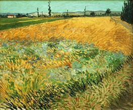 Van Gogh, Champ de blé