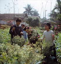 Historical Vietnam - North Vietnam 1973