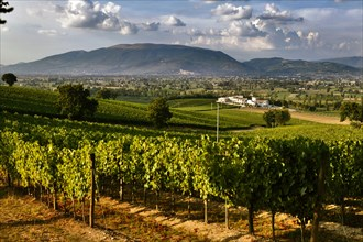 View of the vineyards and the Winery Arnaldo Caprai, Montefalco, Umbria, Italie