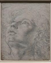 """""""Head of a Young Man"""", by Andrea Del Verrocchio"""