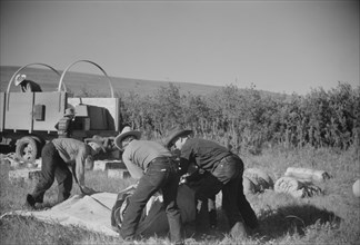Setting up the Roundup Camp, Quarter Circle U Ranch Roundup, Montana, USA, Arthur Rothstein, Farm Security Administration, June 1939