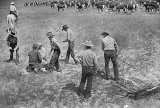 Branding a Calf at Quarter Circle U Ranch Roundup, Montana, USA, Arthur Rothstein, Farm Security Administration, June 1939