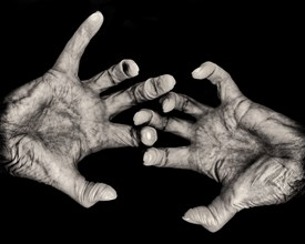 Senior Woman's Palms of Hands and Fingers against Black Background
