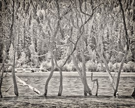 Tree Branches in Lake,,