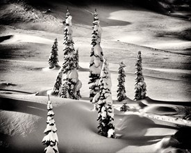Snow Covered Evergreen Trees on Mountain Slope,,