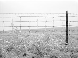 Frozen Barbed Wire Fence, Rockingham County