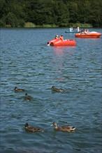 France, Haute Normandie, seine maritime, plateau de caux maritime, lac de caniel, base nautique et de loisirs, plage, nautisme, sports, canards,