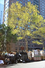 usa, state of New York, NYC, Manhattan, Chelsea, terrasse, building, arbre, ordures, poubelles,