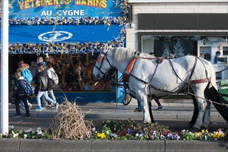 France, region Basse Normandie, Calvados, Cote fleurie, Trouville-sur-Mer, quai Fernand Moureaux, chevaux de trait pour le ramassage des dechets,