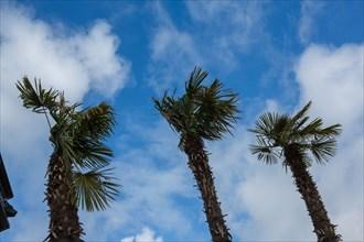 Paris, palmiers sur les bords de Seine