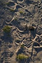 Pointe de Kermorvan, Finistère nord, GR34, traces de pas dans le sable