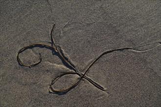 Algue sur le sable
