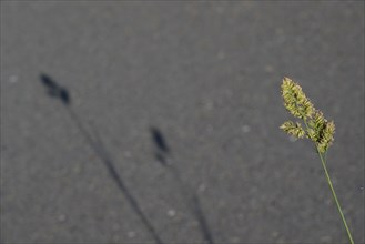 Ombre d'herbe sur la route