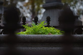 Paris, cimetière du Montparnasse à la Toussaint