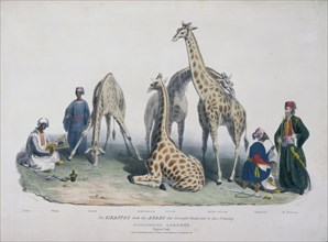 Zoological Gardens, Regent's Park, Marylebone, London, 1836. Artist: George Scharf