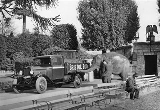 1934 Bedford 30cwt WS truck with an elephant at Bristol Zoo, (c1934?). Artist: Unknown