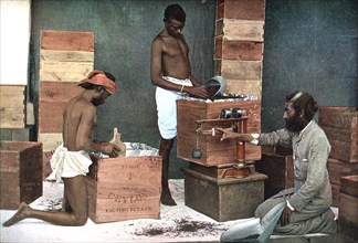 Packing and weighing tea for export on a Ceylon (Sri Lanka) estate, 1905. Artist: Unknown