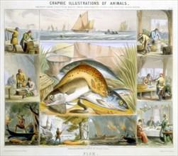 Fish, c1850. Artist: Robert Kent Thomas