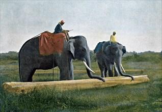 Elephants moving a log, Ceylon, c1890. Artist: Gillot