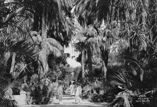 Date palms, Palermo, Sicily, Italy, c1920s-c1930s(?). Artist: Unknown