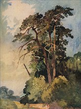 'Study of Trees', c1880. Artist: Alfred William Rich.