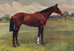 Spearmint, c1905 (c1910). Artist: Unknown.