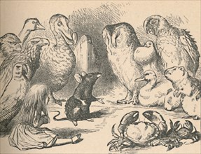 'Illustration for the chapter 'a Caucus-Race and a long tail'. Alice and various creatures, such as  Artist: John Tenniel.