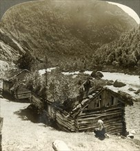 'Old log houses in Bratslandsdal, with trees growing on sod-covered roofs, Norway', c1905.  Creator: Unknown.