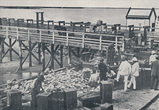 'The Pearl Fishing Industry - Packing Shell', 1923. Creator: Unknown.