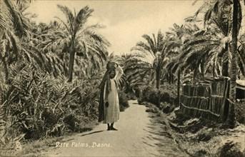 'Date Palms, Basra', c1918-c1939. Creator: Unknown.