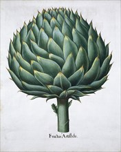 Artichoke, 1613. Artist: Unknown