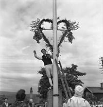 Raising the maypole for the Midsummer celebrations, Sweden, 1951. Artist: Torkel Lindeberg