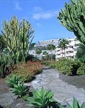 Cactus garden, Puerto Rico, Gran Canaria, Canary Islands.