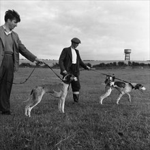 Hound Trailing, one of Cumbria's oldest and most popular sports, Keswick, 2nd July 1962. Artist: Michael Walters