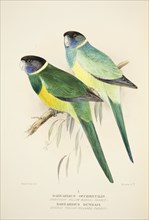 Northern Yellow Banded Parrot and Dundas Yellow Collared Parrot, pub. 1916 (hand coloured engraving) Creator: Roland Green (1896 - 1972).