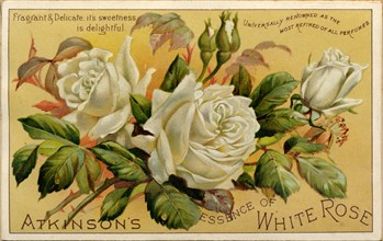 Atkinson?s Essence of White Rose, 19th century. Artist: Unknown