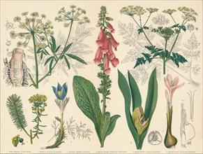 British Poisonous Plants', mid-late 19th century.