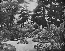 Arizona Garden. Monterey, Cal.', c1897.