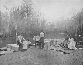 Loading Oranges on the Ocklawaha River, Florida', c1897.