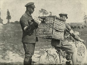British Army Carrier Pigeons in France', (1919).