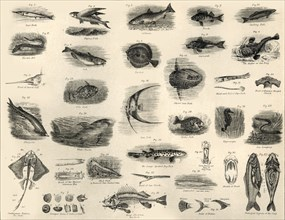 'Fishes', c1910