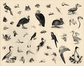 'Birds', c1910