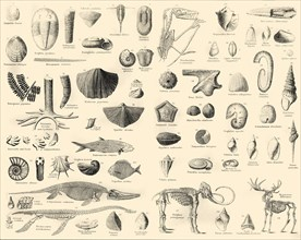 'Palaeontology', c1910
