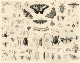 'Insects', c1910