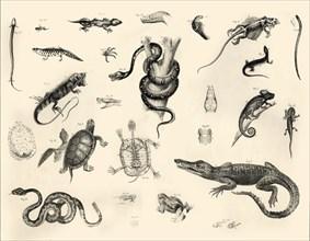 'Reptiles', c1910