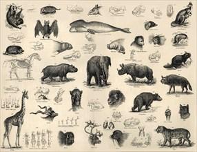 'Mammals', c1910