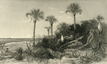 'On the Coast of Florida', 1872.  Creator: Robert Hinshelwood.